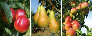 Frutti estivi